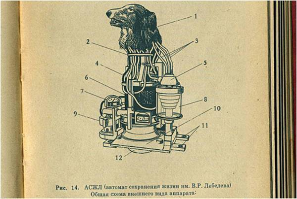 A 1930's Russian experiment manual depicting a hand drawn bear head surviving atop a mechanical robotic boy.