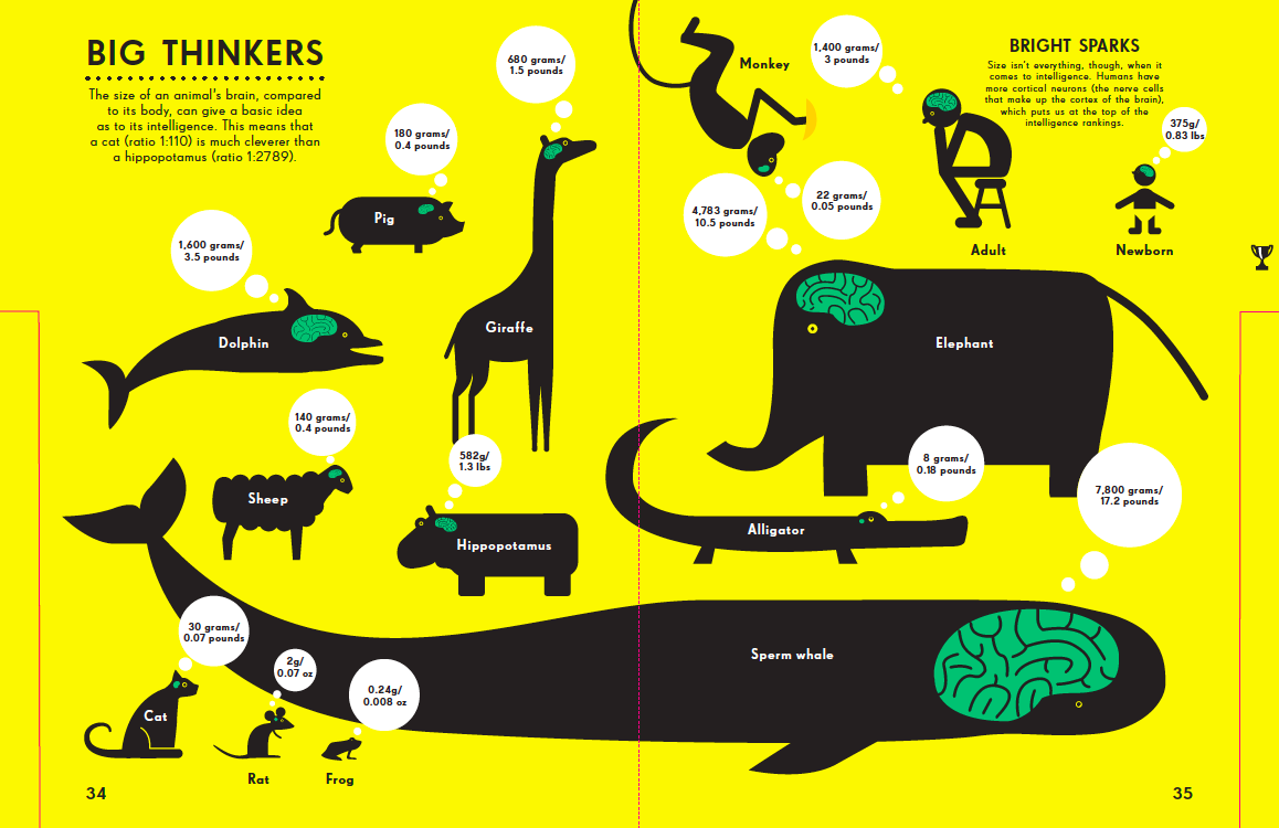 Infographic entitled Big Thinkers showing animals' brain sizes